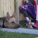 RT @HuffingtonPost: Fallen Canadian soldiers dogs wait for their master to return http://t.co/p1AYFjoSs5 http://t.co/MPzxVlYrjg