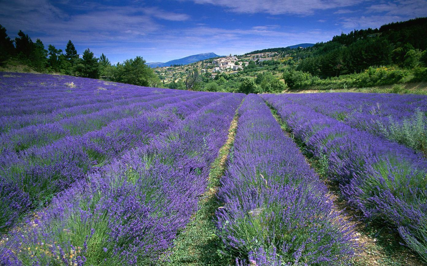 RT @We_Love_France: La Provence http://t.co/Z8QaaxE4G8