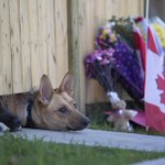Dogs peek out from under a gate at Cpl. Nathan Cirillos home in Hamilton. #OttawaShooting http://t.co/CG0gobukt3