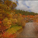 "RT @pmwarner: Beautiful! MT @GMPPhotography: ""Fall on the Little #Spokane River"" http://t.co/dTpXzPqvjf via @VisitSpokane"