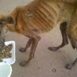 RT @360UCV: #23Oct URGENTE @Marinick5  perrito desnutrido en los mesones, calle los medanos #Anzoategui  04248450573 04261807168 https://t.co/ZuQj2nP22x