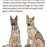 Dogs of almost any pedigree can be trained for police work, but these breeds are more common http://t.co/fKTUaPvOo8 http://t.co/aIOWzo9f60