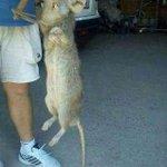 RT @fedeortizmarti: @julioinsadji @ruvaza hoy caen las ratas http://t.co/d03uZEXLAX
