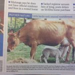 Busted:@dailynation photo taken Uasin-Gishu or New Zealand ask Jacob Owiti http://t.co/jo2KsibPg2 #Kenya #Orie http://t.co/8wgnsYb1Y8