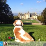 When you come to #Asheville, bring your furry friends too! This #repost from @debbielenz... http://t.co/4ppea8fQm6 http://t.co/9Ks4naQ7DJ