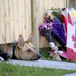 RT @NBCNews: Cpl. Nathan Cirillo's dogs wait for his return home after he was fatally shot http://t.co/cZwig68GR5 http://t.co/BGWFI6JTKn