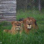 RT @ObservadorUY: Cuenta regresiva para el viaje de los leones http://t.co/ouZP6bkjZQ http://t.co/3C5qKCcgZF
