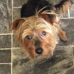 RT @samlocktight: Found Dunmurry lets help this wee man get Home @AlexKane221b @barrabest @BelTel someone is missing him! Please RT http://t.co/suFddL1BNc
