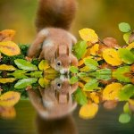 MT @sgerendaskiss: Little #RedSquirrel is only a tiny part of our #Biodiversity http://t.co/jfvcOvw1WR perfect autumn pic