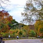 RT @gigi_nyc: Enjoy #autumn colors at the North Meadow @CentralParkNYC #NYC #centralparkmoments Happy Friday! http://t.co/nlScIMGxPl