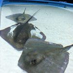 RT @SBHMCsf: Ever touched a stingray?! Visit our Marine Cove to pet our three Southern Stingrays! #SBHMC #siouxfalls #marinecove http://t.co/SyPkYyr4Je