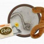 RT @JornalOGlobo: Vende-se de tudo: ebola de pelúcia faz sucesso e esgota nos EUA. http://t.co/olwZ0RgpLL [@BlogPageNFound] http://t.co/h4Tp9wSKTx