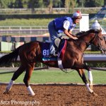 Conquest Typhoon galloping #BC14 http://t.co/i8BwbcgLtk