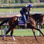 Cristinas Journey galloping #BC14 http://t.co/RpqTRAZKTb
