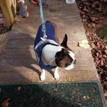 Found him on willowdale road #lostdog #morgantown #wvu please spread! http://t.co/Q9yKanApWM