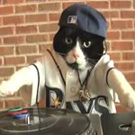RT @MatthewSardo: BREAKING NEWS: According to @Aborgesn #Rays mascot DJ Kitty has just opted out of his contract. http://t.co/w6E39ccXki