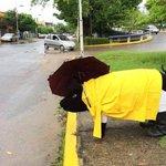 #ComunidadTH: Mientras tanto en Gaviotas... #Lluvias2014 http://t.co/huObMUlmzn