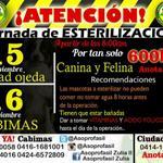 RT @Asoprofasil: Jornadas de esterilizaciones a bajos costos 15Nov/Ciudad Ojeda-16Nov/Cabimas. Costo:600 BsF. Servicio de taxi y PdV. http://t.co/RBUxLUeUHi