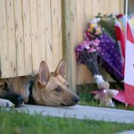 RT @WPXI: #HEARTBREAKING -- Dogs of fallen Canadian soldier still wait at home for his return http://t.co/4PWlVIxuk1 http://t.co/XnlFCJ5TTt