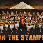 Today their historic season continues!! Good luck to @TaranakiRugby, stampede them! #tarvtas #itmfinal http://t.co/vcnVnghMgi
