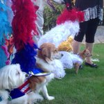 Fabulous Palm Springs Follies goes to the dogs http://t.co/s0oCmdzv1W http://t.co/J9LEZpv86C