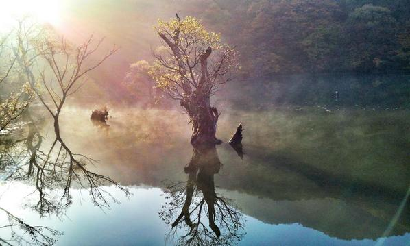 주산지의 아침. (베가R3) #dicadong http://t.co/vLMKJ78vom