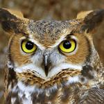 Filming the Great Horned Owl of the Carolinas this weekend for new doc. WHO-hoo! Fantastic Friday people! #charlotte http://t.co/fbaJ0JLsuA