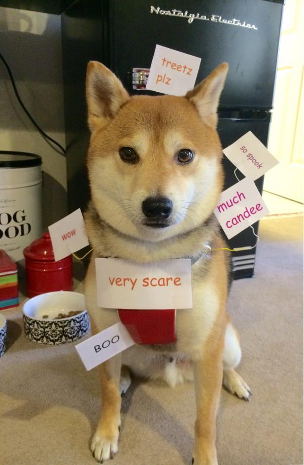 @darth I thought my shiba's costume might be relevant to your interests RT @ScarletRegina: Amaze. #doge. #Halloween http://t.co/UfJskvX2CI