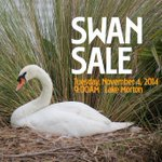 RT @lakelandgov: COL to sell qty of mute swans Nov 4th /9AM/Lk Morton. $800 per pair. #lkld @WFLAHolly @abcactionnews @MyFoxTampaBay http://t.co/kUjuT4yAAR
