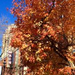 RT @oliveandco: Our beautiful St. Anthony Main neighborhood is erupting in #fall color. #Minneapolis http://t.co/NzFJiXNRZ7