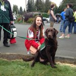 """This is """"Bungee"""", a therapy dog brought to #Marysville for the students dealing with todays tragedy. http://t.co/XkwoeVAgg9"""