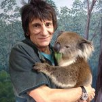 """@theTiser: Would you like to hold a koala? @ronniewood! http://t.co/BqltaxEptz http://t.co/4OcT0cZByL"""
