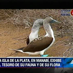"""@ecuavisa: #EcuadorSobreRuedas Los tesoros de la Isla de la Plata ▶ http://t.co/NbT8lUyJsY http://t.co/ZgbfqwrjjV"" // @maurotri"