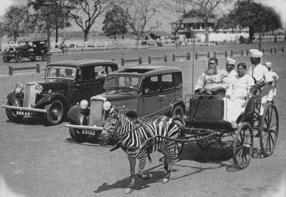 1930s :: A zebra Cart in Calcutta http://t.co/h4QOuI55kq #HappyNewYear
