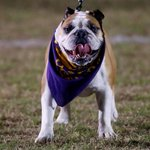 Male High Schools mascot Georgia wanted me to reassure you no bulldogs were used in my #BulldogBurger #loufb http://t.co/Yri4JD8cnD