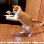 RT @SUNTomBraid: Classic #MadMax Maudie #Cat Vs #perogy! .@maxmaudie #Edmonton Cat Fanciers show Oct. 25 & 26 Ramada on Kingsway #Yeg http://t.co/8orfe7Td7z