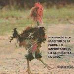 RT @tomas_leiva68: #ParaHoyNecesito Un mambito http://t.co/dSI6sKuDJe