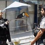 RT @pavoc1: Quem foi que disse que não tem tucano preso? #SomosTodosDilma http://t.co/Uhl7XJSm0Q