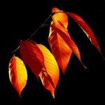 Der Herbst ist immer unsre beste Zeit. Johann Wolfgang von Goethe Schönes Wochenende! Foto: @cocoparisiennepixabay) http://t.co/Jk9qUG7mPH