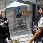 """""""@pavoc1 Quem foi que disse que não tem tucano preso?"""" #SomosTodosDilma http://t.co/qWlYHiCHQT"""