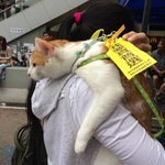 RT @stegersaurus: About time a cat came to show support http://t.co/AAtRzaiZtE