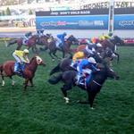 Adelaide wins the W.S. #CoxPlate (@AdamTABSports pic) and he lost his near hind plate in the race via @kasand1904. http://t.co/qKIjGfpmDP