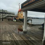 """By @ohsarahdar """"Theodores face reflecting in a puddle! Im easily amused. #halifax #tugboat #murphys"""" http://t.co/ivNofWLsMM"""