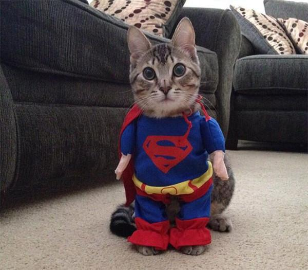 Happy halloween, yo. #caturday http://t.co/Ekd4VVqrzm