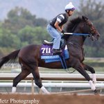 Lucky Player galloping #BC14 http://t.co/qlu365EBup