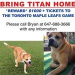 Anyone seen Titan? Help get him home @Ptbo_Canada @PtboCanada @LostFoundPtbo http://t.co/Fs3iTXCddY