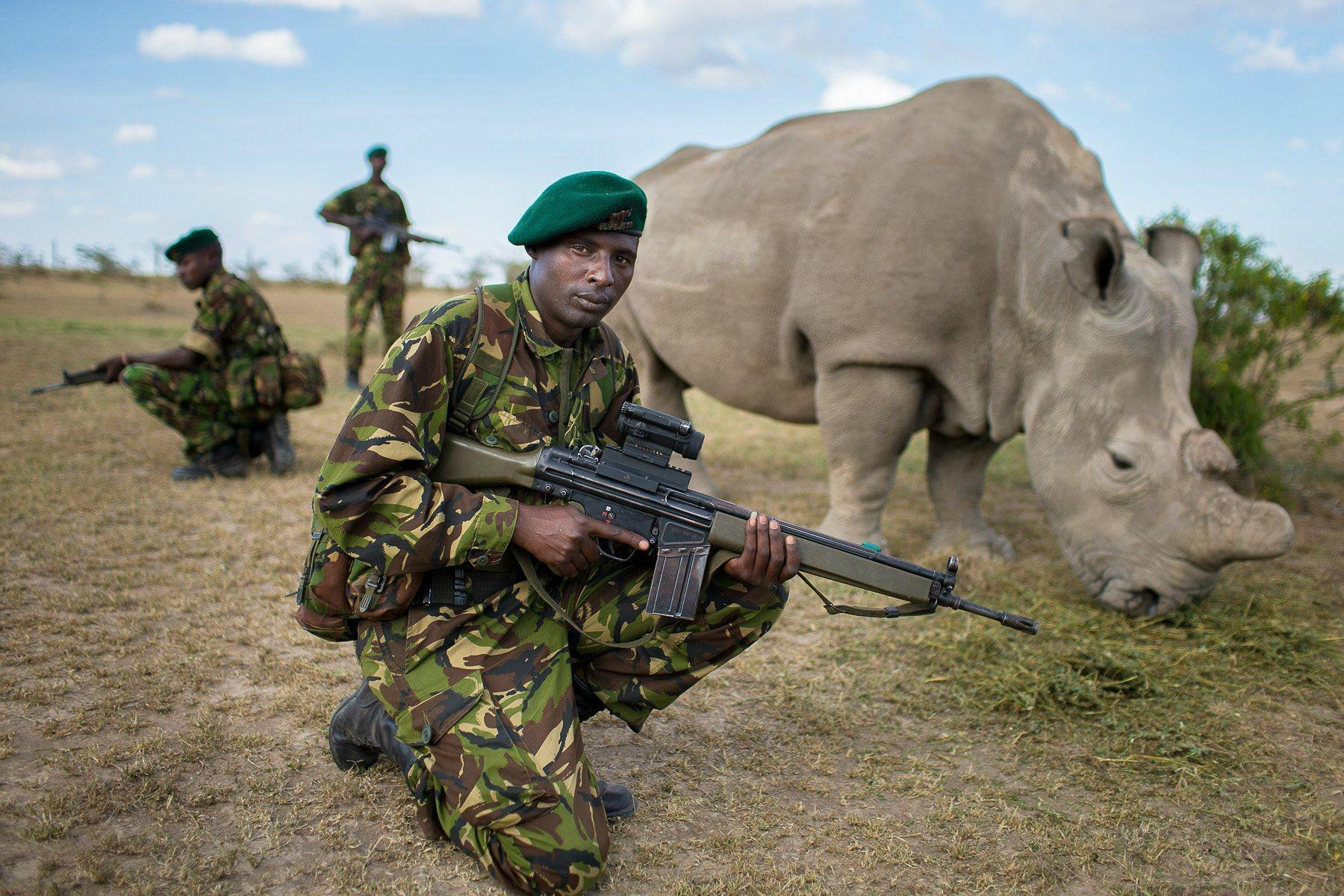 Bodyguards protect one of six remaining Northern White Rhinos: http://t.co/3sU7l7SKj2
