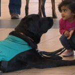 RT @CBCEdmonton: Pet therapy program at @FlyEIA lends a paw to anxious, nervous flyers http://t.co/PPgB6aonhr #yeg http://t.co/VLgX4Lv05Y