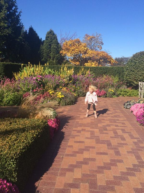 Had a great time at @chicagobotanic today- I'd say it's prettier there today than in June! http://t.co/N8thtaJ3XN