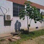 影が恋人同士に見える 木がリア充してるんだけどww http://t.co/mUXFb8knHd